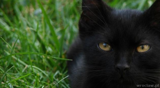 czarny-kot-3
