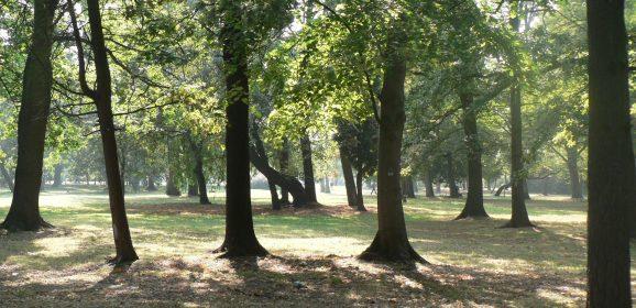 Powstanie nowy, mini-park na Gaju!