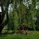 Miasto wybrało wykonawcę nowego parku przy ul. Kukuczki