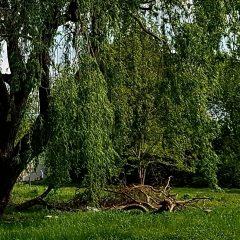 Więcej zieleni na Gaju! Przybędzie nowych drzew!
