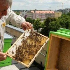 """""""Na wrocławskich osiedlach brakuje zapylaczy"""" – wywiad z pszczelarzem z Gaju"""